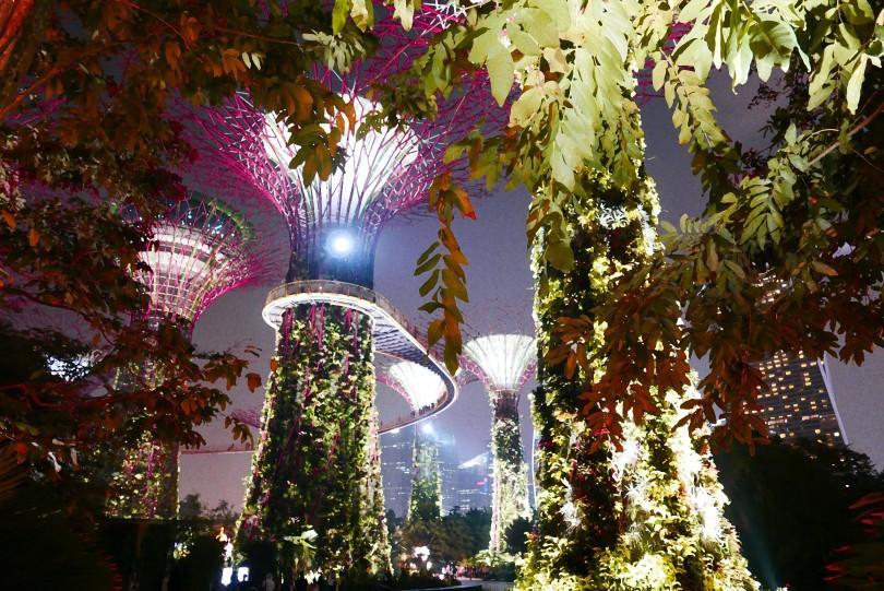 garden blog 3