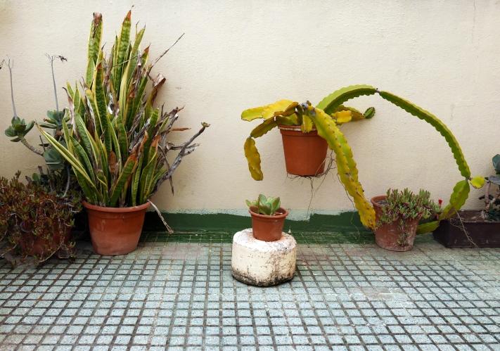 1-cacti