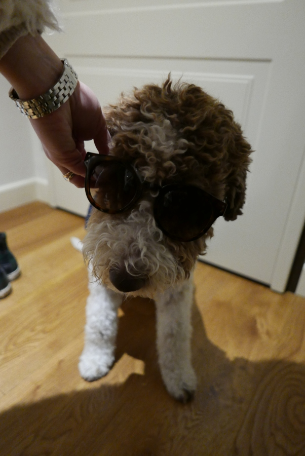 fidel-with-sunglasses